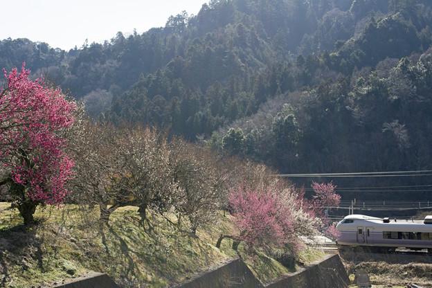 Photos: 春なのに