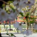 写真: 片隅の春