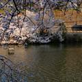 写真: 水面の春