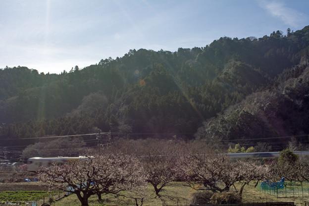 春の日差しサンサン