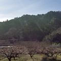 写真: 春の日差しサンサン
