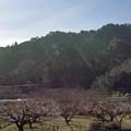 Photos: 春の日差しサンサン