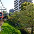 写真: 葉桜