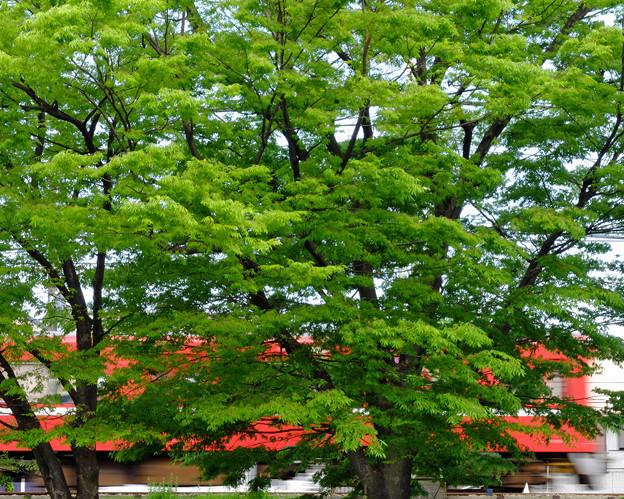 赤い薫風2