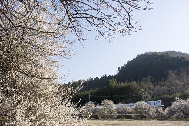 写真: 峠道の春