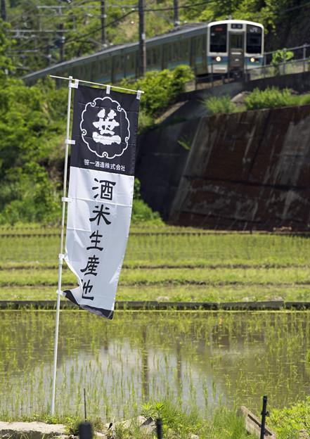 写真: 酒米生産地
