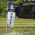 Photos: 酒米生産地