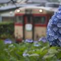 Photos: あの日の急行列車