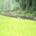 写真: 田んぼの向こう