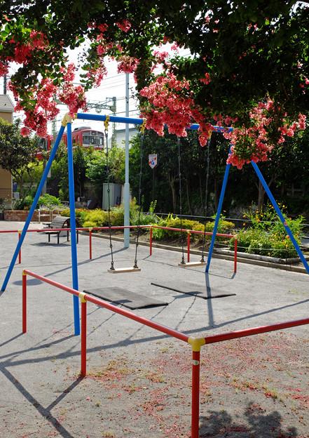 百日紅の咲く公園