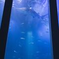 写真: 海底基地