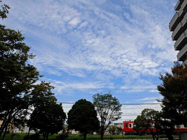 写真: 秋空(1)