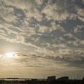 Photos: 若い太陽