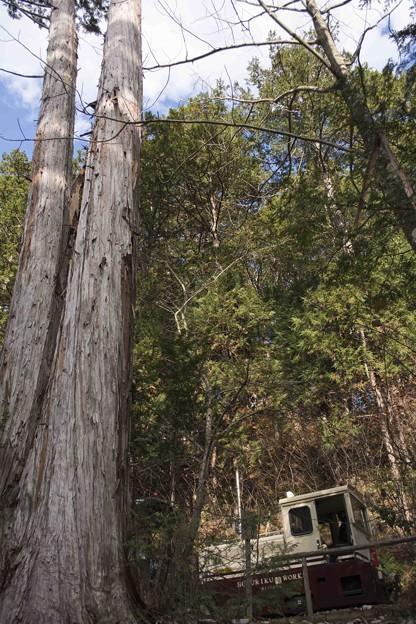巨木に見下ろされ