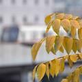 Photos: 晩秋の風