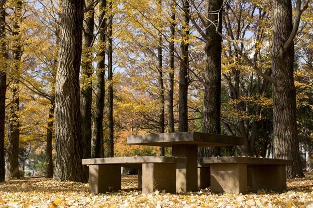 木漏れ日公園