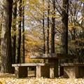 Photos: 木漏れ日公園