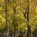 写真: 木々の井戸端会議