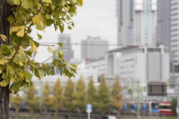 摩天楼の秋