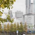 写真: 摩天楼の秋