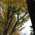 Photos: 黄緑色の季節