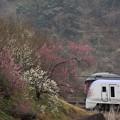 Photos: 一足早い春