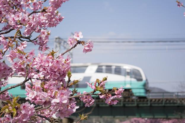 河津桜を「スーパービュー」