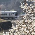 Photos: 春の陽光