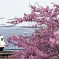 写真: 海と桜