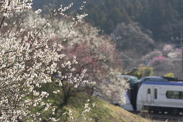 春色の高尾山麓