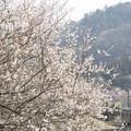春の陽をいっぱいに浮けて