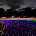 Photos: 木曽三川公園イルミ