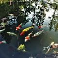 Photos: お寺の池