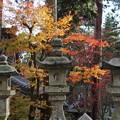 Photos: 秋のお寺さん