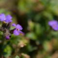 """Photos: 庭先の花"""""""
