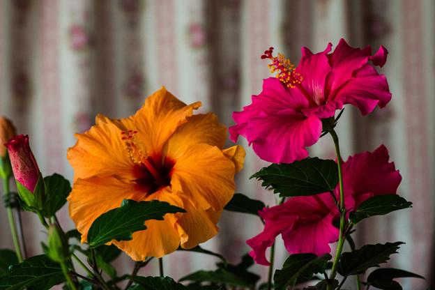 Photos: オレンジ&ピンク