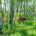 写真: ー鹿の親子ー