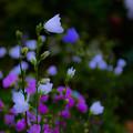 写真: ー可愛い花ー