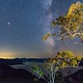写真: ー木立と天の川ー