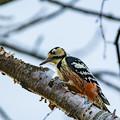 Photos: ー野鳥ー
