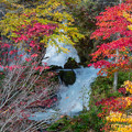 写真: ー渓流の紅葉ー