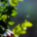 Photos: ー赤い実ー
