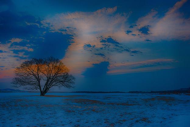 ーハルニレの木ー