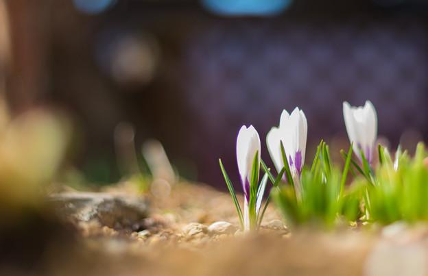 ー春の兆しー