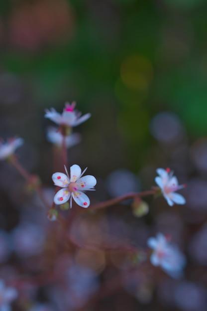 ー庭に咲く草花ー