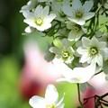 クレマチスが咲き始めました