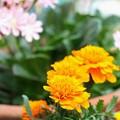 夏のお花畑のキャスト