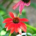 写真: 頼もしいお花です