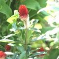 庭に咲くイチゴ