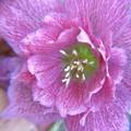 写真: 頼もしいお花